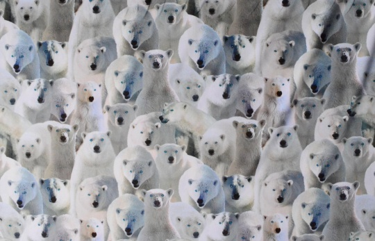 """Mikrofaser Druck Farbrichtung weiß/oystergrau/""""bläulich petrol"""" Eisbären individuell abgeschnitten"""