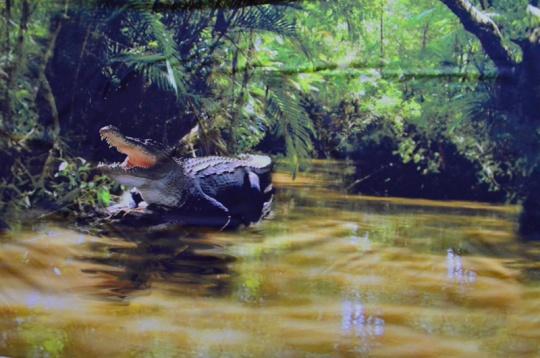 Badeware Druck Krokodil   Rapport!!